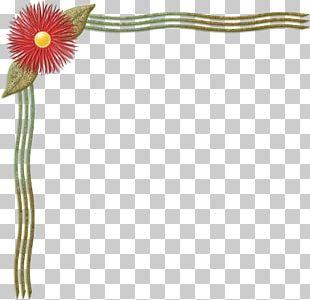 Flowering Plant Petal Plant Stem PNG
