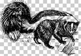 Striped Skunk Spotted Skunk Drawing Black And White PNG