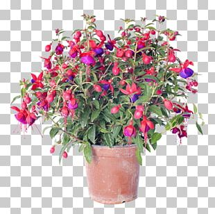 Flower Delivery Fuchsia Stock Photography Floristry PNG