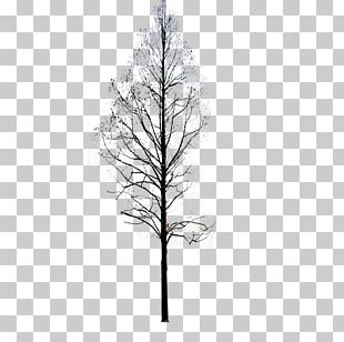 Twig Pine Black And White Symmetry Pattern PNG