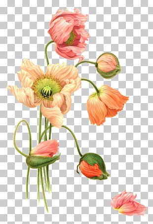 Flower Watercolor Painting Illustration PNG