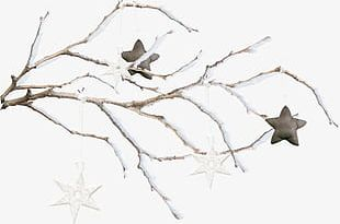 Snow Branch PNG