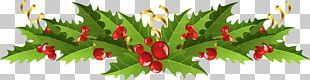 Mistletoe Christmas Decoration Common Holly PNG