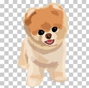 Pomeranian Puppy Boo PNG
