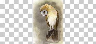 Owl Watercolor Painting Bird Art PNG