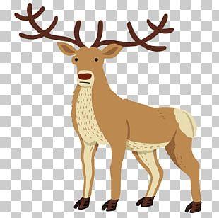 Reindeer Red Deer Drawing Elk PNG