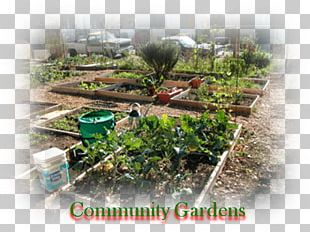 Tree Land Lot Community Gardening Houseplant PNG