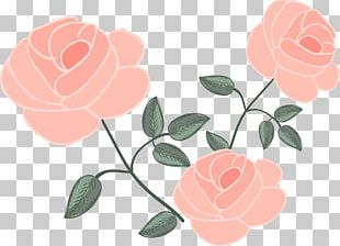 Rose Flower Euclidean Drawing PNG