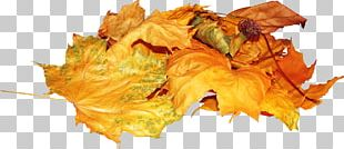 Autumn Leaves Leaf PhotoFiltre PNG
