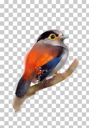 Bird Beak Feather Painting PNG