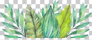 Leaf Amazon Rainforest Watercolor Painting Arecaceae PNG