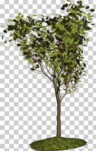 Plane Trees Shrub Blog Plant PNG