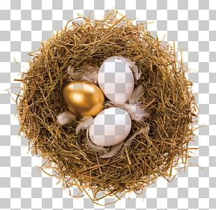 Bald Eagle Bird Nest Bird Nest Egg PNG