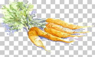 Carrot Drawing Vegetable Watercolor Painting Sketch PNG