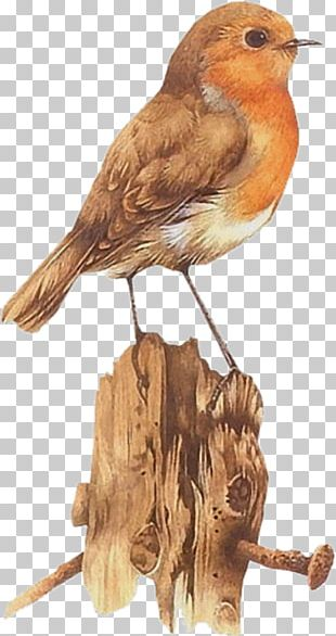 Bird Watercolor Painting Art Drawing PNG