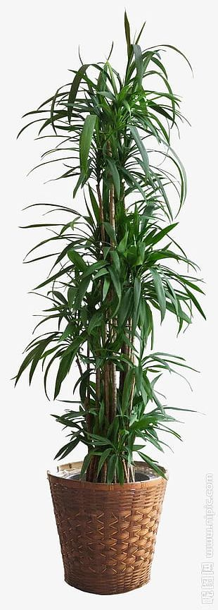 Green Large Leaf Plant Potted PNG