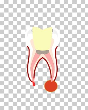Tooth Fairy Human Tooth Molar Mouth PNG