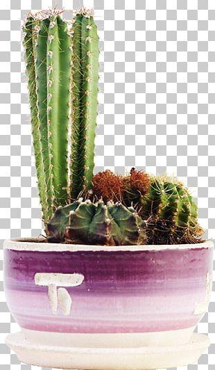 Cacti And Succulents Cactaceae Succulent Plant Flowering Plant PNG