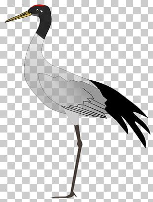 Ladakh States And Territories Of India Bird Crane PNG