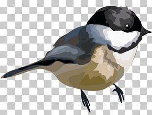 Bird Beak Watercolor Painting PNG