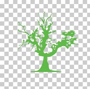 Tree Euclidean Arecaceae PNG