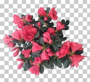 Cut Flowers Azalea Plant Rhododendron PNG