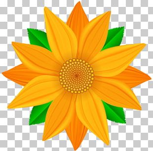 Portable Network Graphics Flower Open PNG
