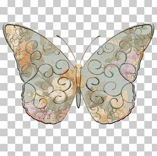 Monarch Butterfly Insect Moth Borboleta Milkweed Butterflies PNG