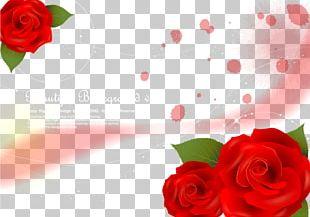 Garden Roses Beach Rose Red PNG
