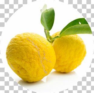 Citrus Junos Juice Citron Citrus Fruit Pomelo PNG
