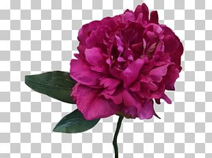 Peony Cut Flowers Artificial Flower Plant PNG