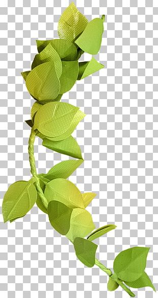 Autumn Leaf Color Green Branch PNG