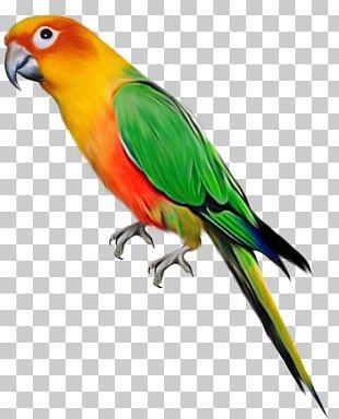 Parrot Bird PNG