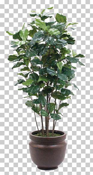 Plant Flowerpot Glass PNG