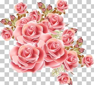 Rose Flower Drawing Stock Photography PNG