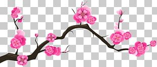 Cherry Blossom Branch Tree Almond PNG