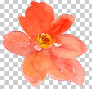 Watercolor Painting Flower Drawing PNG