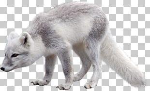 Arctic Fox Polar Bear Arctic Hare PNG