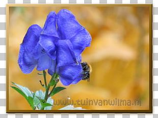 Violet Petal Wildflower Annual Plant Bellflowers PNG