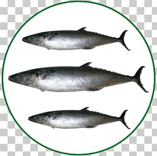 Sardine Pacific Saury Salmon Mackerel Fish Products PNG