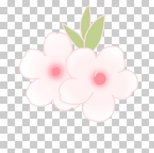 Petal Floral Design Rose Family PNG