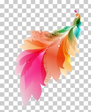 Feather Color PNG