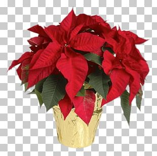 Cut Flowers Poinsettia Lowe's Plant PNG