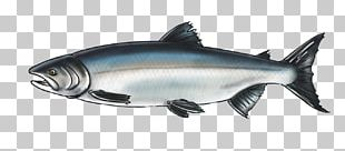 Salmon Squaliform Sharks 09777 Marine Biology Oily Fish PNG