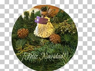 Christmas Ornament Pine Family Christmas Day Pine Family PNG