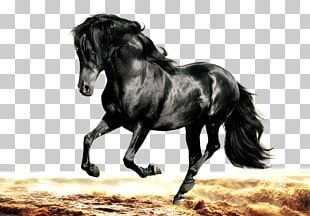 Arabian Horse Morgan Horse Friesian Horse Stallion Black PNG