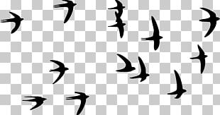 Swallow Bird Paper Tattoo Flock PNG