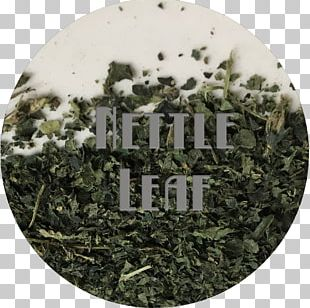 Common Nettle Sencha Tincture Elderberry Salve PNG
