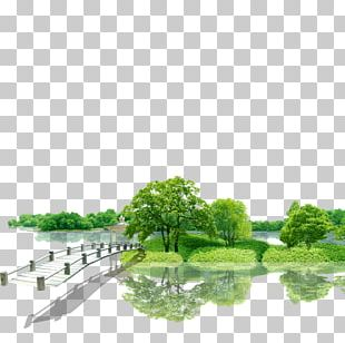 Green Nature Beauty Environment PNG