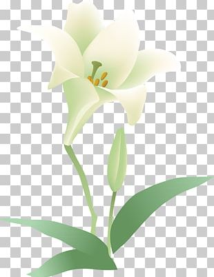 Flowering Plant Cut Flowers Moth Orchids PNG